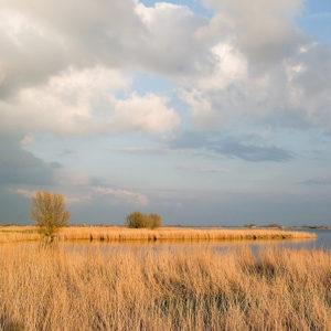 Zonnestralen-Vangen-Met-Pasen-Rietvelden-Eernewoude